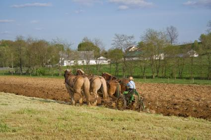 horse-drawn equipment on Amish family farm in Lancaster County