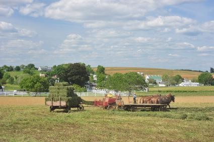 harvesting grass on an amish farm in lancaster county