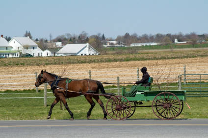 amish market buggy