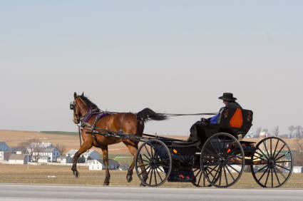 amish courting buggy