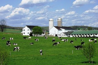 Lancaster County Dairy Farm